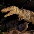 life---Age-of-the-Dinosaur-at-Life-Science-Centre-(100)-copyright-Natural-History-Museum.jpg